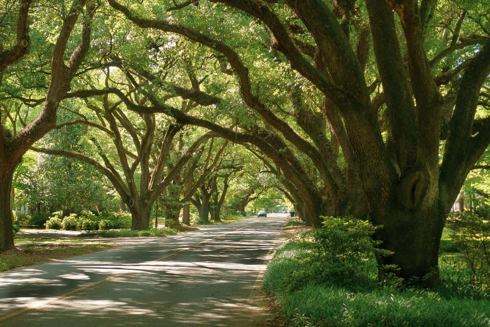 South Boundary Road, Aiken. © Mary & Charles Love