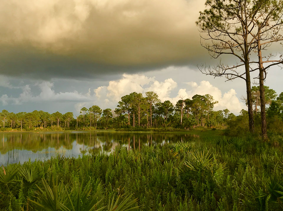 Fred C. Babcock/Cecil M. Webb Wildlife Management Area, near Punta Gorda, Florida