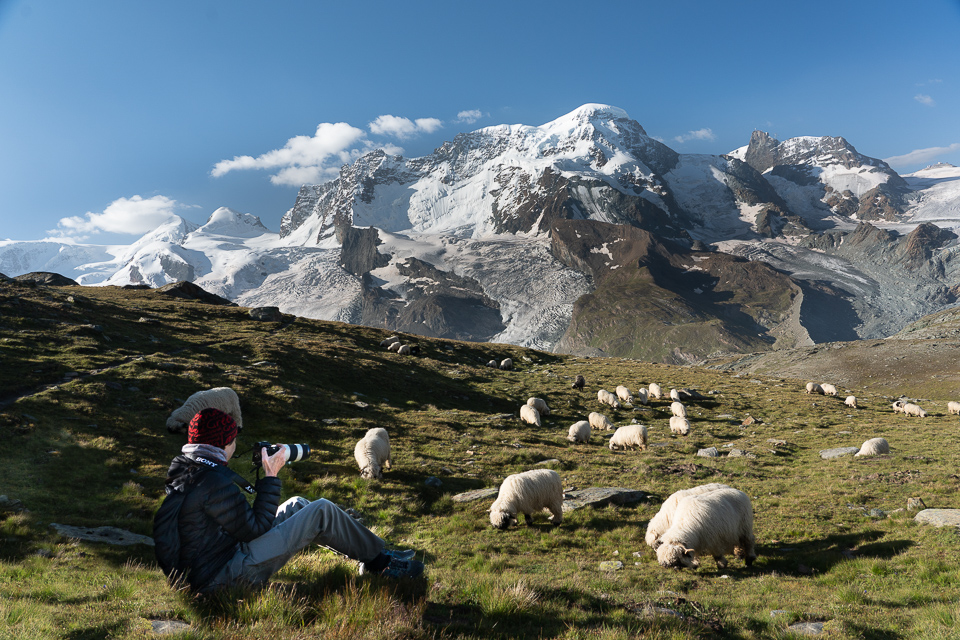 Mary with Blacknose Sheep on the Gornergrat © 2021 Charles Love